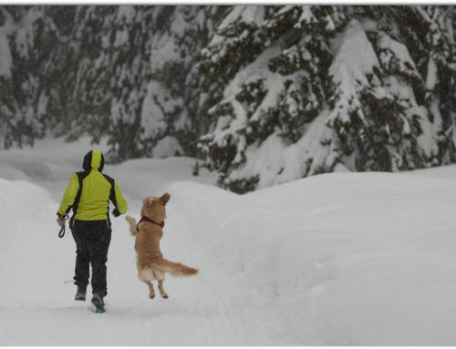 Vacanza sulla neve con i vostri amici a quattro zampe da € 210