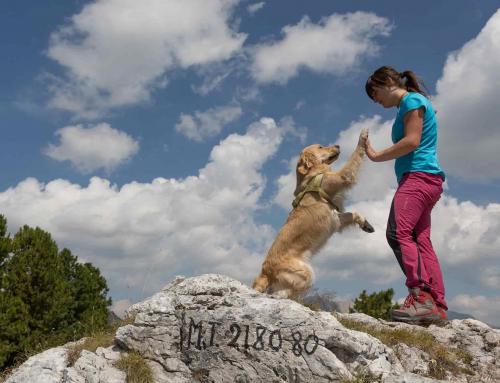 Vacanza con i vostri amici a quattro zampe tra i boschi della Val di Fiemme da € 239