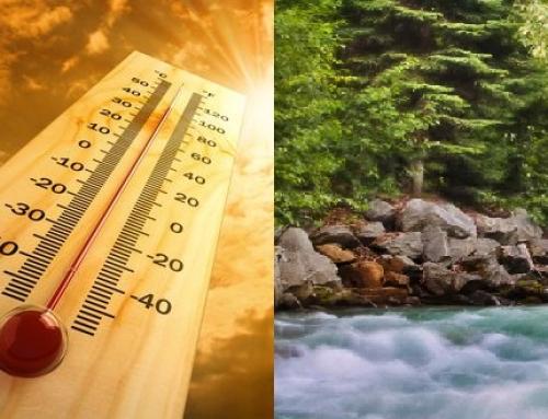 Caldo da record: prenota la tua vacanza estiva tra i boschi delle Dolomiti