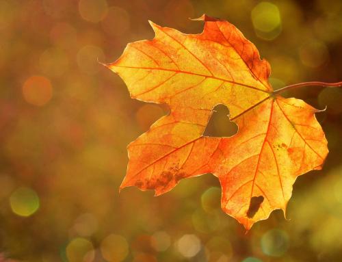 Viva l'autunno!